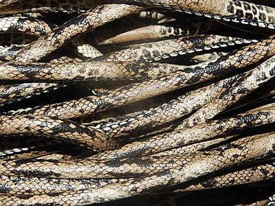 DRL701R60 PU imitatieleer gestikt 20 cm bruin/zwart slangeleer 6 mm